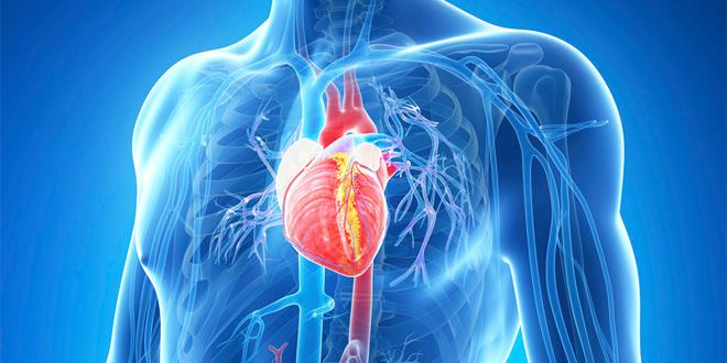 Profilaktyka dla chorób serca, układu krążenia i nadciśnienia tętniczego